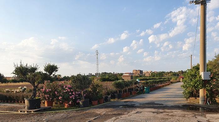 A foto taken from Vivaio Amalfa